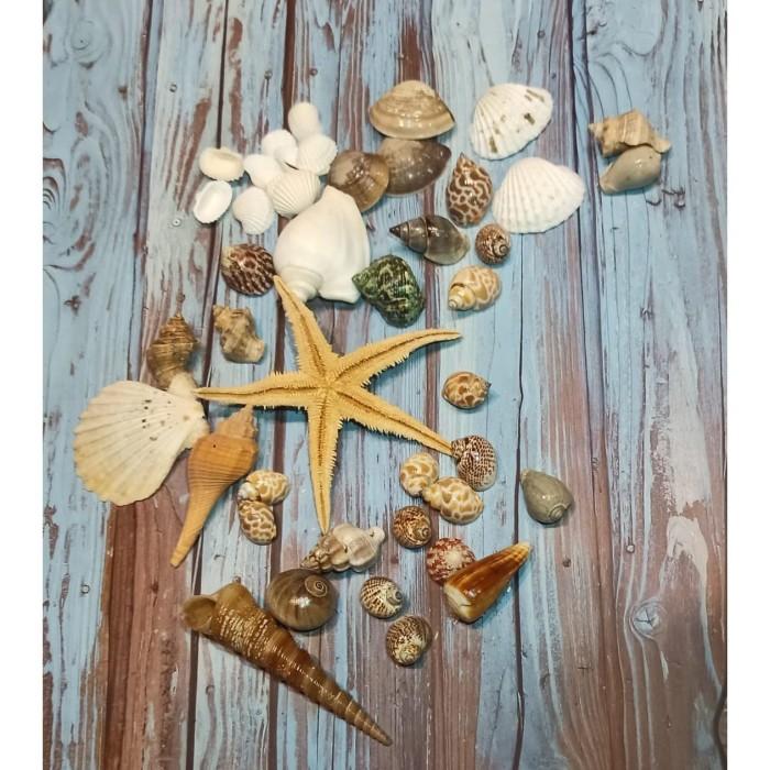 Foto Produk Kerang Laut Set Properti Foto Photography Hiasan Rumah Sea Shells dari TwilightShop