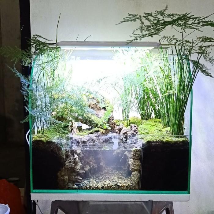 Jual Paludarium Terrarium Jakarta Barat Amat Aquascape Tokopedia