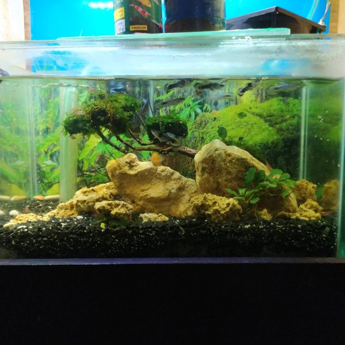 Jual Aquascape Full Set Aquarium 40 Cm Tank 30cm Jakarta Selatan Shadetrees Tokopedia