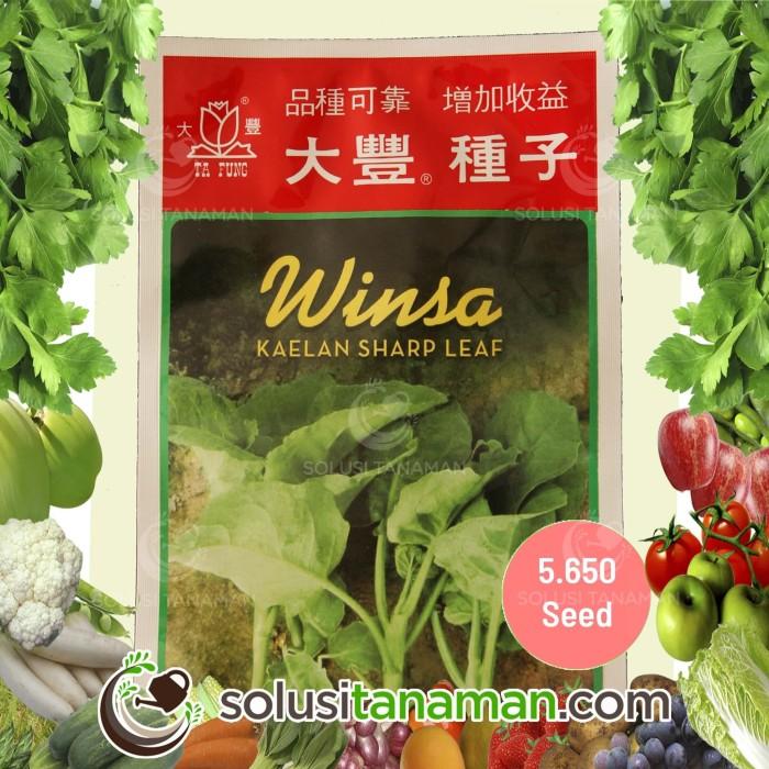 Jual Benih Sayuran Kailan Kale @20gr - Biji Bibit Sayur