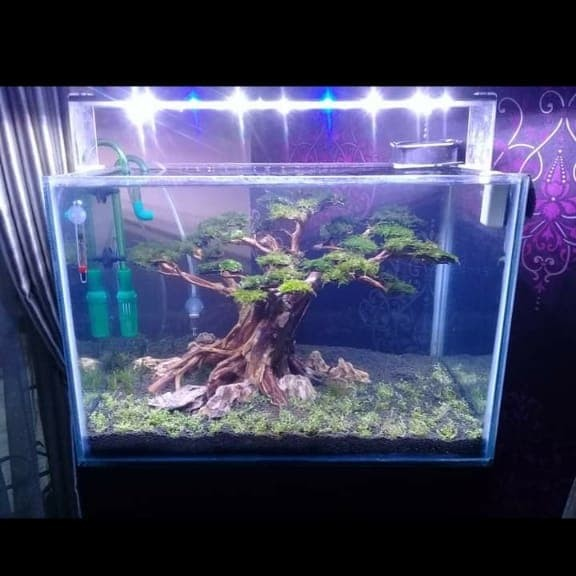 Jual Aquascape Jasa Bonsai Waterfall Aquarium Ikan Hias Bonsai Kota Metro Aquado Tokopedia