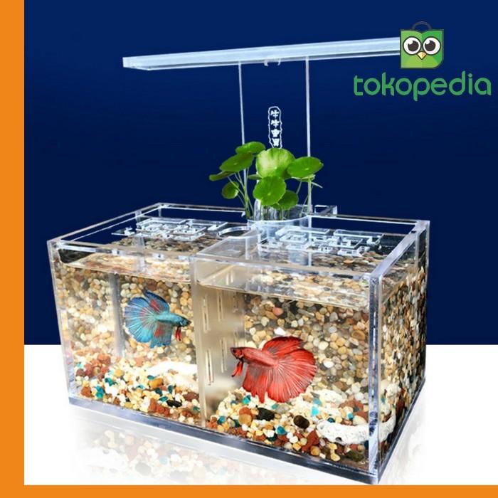 Jual Led Light Acrylic Clear Aquarium Mini Betta Fish Tank Miami Kota Depok Upstart Shop Tokopedia