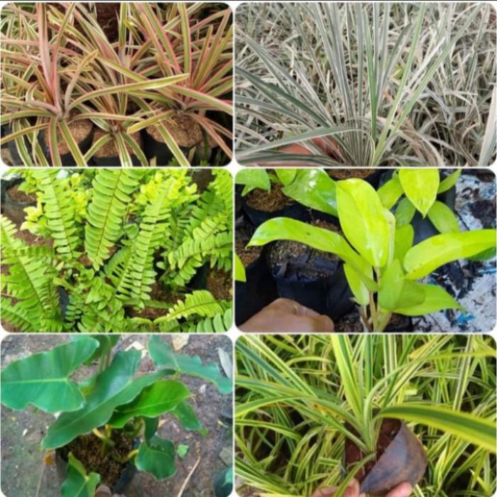 Jual Tanaman Vertical Garden Paket 200 Pohon Untuk Luas 4 Meter Kab Bogor Ikmaflora Tokopedia