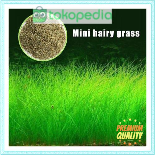 Jual Hair Grass Bibit Tanaman Air Mini Hairgrass Seed Aquascape Aquarium Kota Yogyakarta Hestyulfioky Tokopedia