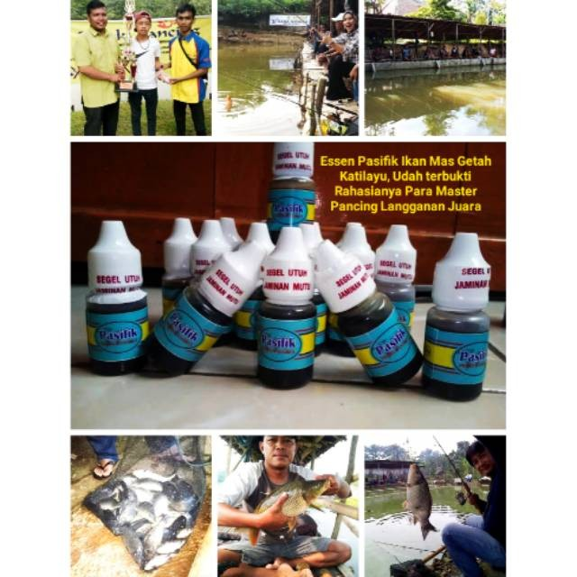 Jual Essen Ikan Mas Pasific Getah Katilayu Cocok Segala Cuaca Panas Hujan Jakarta Pusat Botekno Tokopedia