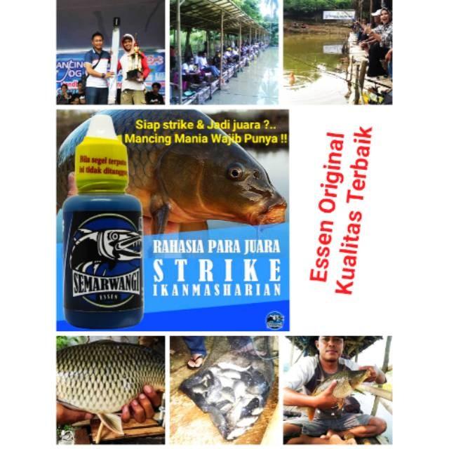 Jual Resep Tetes Umpan Ikan Mas Essen Semarwangi Esen Oplosan Terbaik Jakarta Pusat Botekno Tokopedia