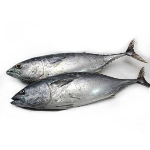 Jual Ikan Tongkol Besar Kota Batam Tos 3000 Trishopy Tokopedia