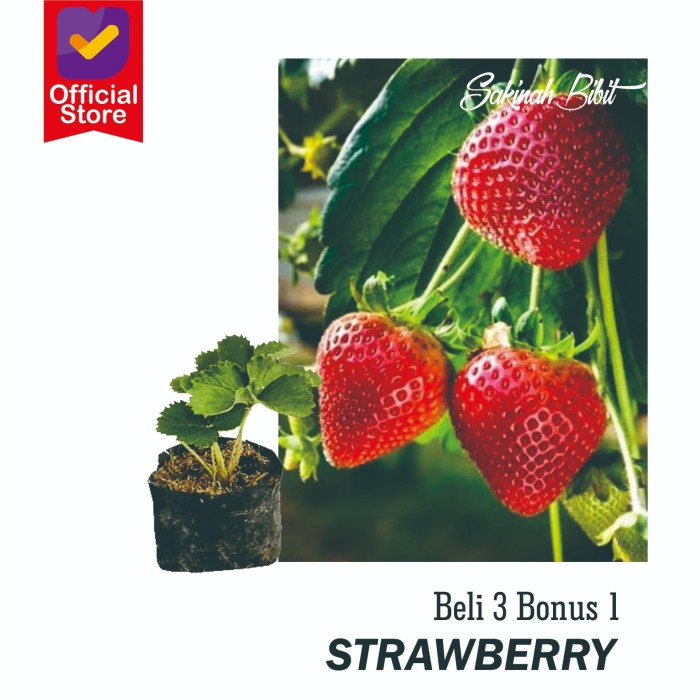 Kebun Strawberry Tangerang