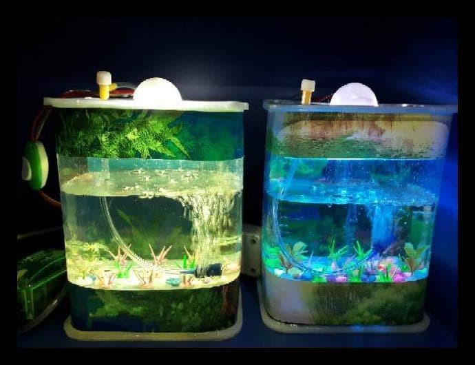 Jual Ready Stok Aquarium Mini Ikan Hias Dan Cupang Lampu Tidur Mesin Kab Bekasi Sinarjayastore9 Tokopedia