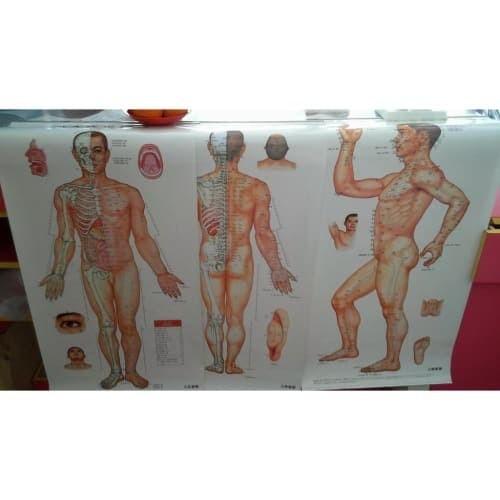 Foto Produk Gambar / Poster Titik Akupuntur Pria dari Vintaco