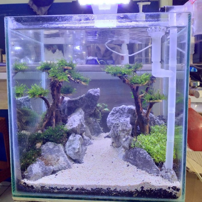 Jual Aquascape Set Kota Depok Fishbone Indonesia Tokopedia