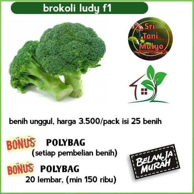Jual Termurah Benih Brokoli Ludy F1 Benih Unggul Bibit Tanaman Sayur Kab Wonosobo Story Sopline Tokopedia