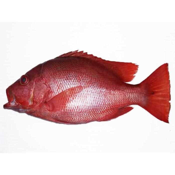 Jual Ikan Kakap Merah (kilo) - Kota Bogor - 3FMART by YUMMY BOGOR |  Tokopedia