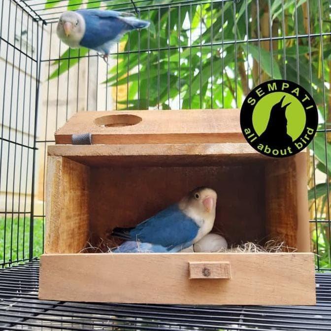 Jual Glodok Parkit Kayu Sarang Ternak Koloni Burung Lovebird Kenari Glprkt Jakarta Barat Kicau Acc Tokopedia