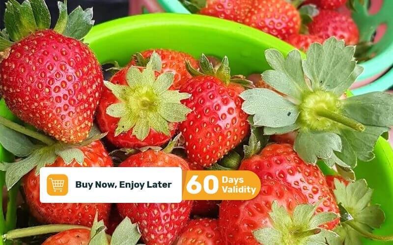 Petik Buah Stroberi untuk 2 Orang (Free Strawberry + Makan + Minum)