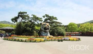 Seoul Zoo Included Sky Lift  Elephant Train Combo Ticket Seoul - Background