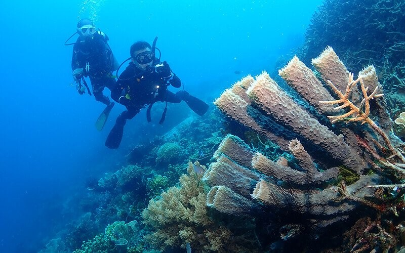 One Day Trip by Regular Boat + Pramuka Island Diving Package  (with certified divers)
