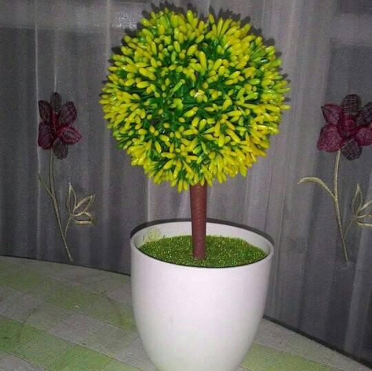 harga Bonsai Tokopedia.com