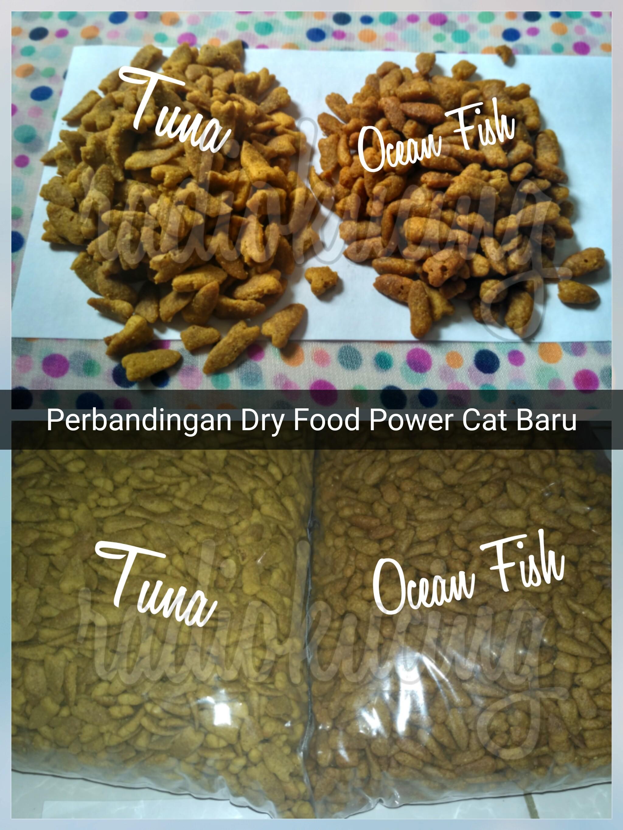 Dry Food Kucing Food
