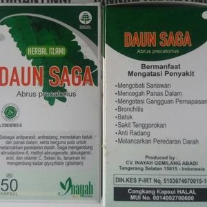 herbal alami daun saga obat sariawan dan panas dal