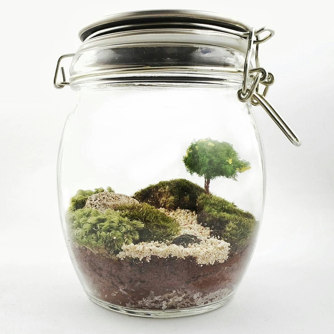 Jual Large Moss Terrarium Decoration In Glass Jar With Lock Diy