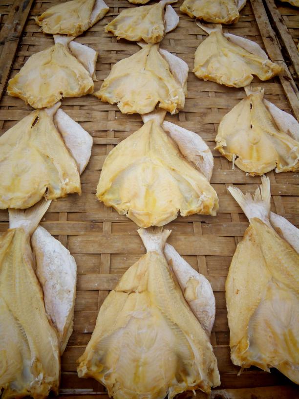 Download 66+ Gambar Ikan Jambal Roti Terbaru Gratis