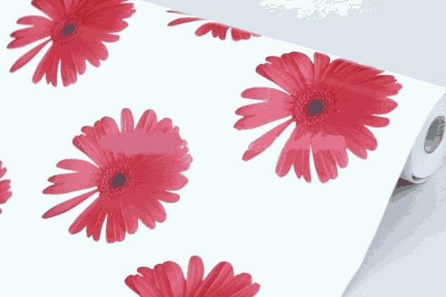 Unduh 1030+ Background Putih Daisy Gratis