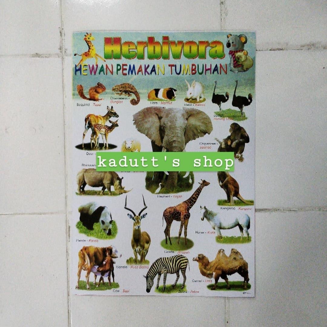 4200 Koleksi Gambar Ornamen Hewan Dan Tumbuhan Gratis Terbaru