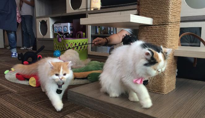 Hasil gambar untuk cutie cats cafe jakarta