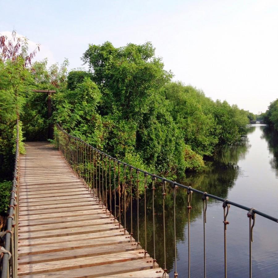 Jalan - Jalan ke Wisata Hutan Mangrove Angke PIK - Tokopedia Jakarta